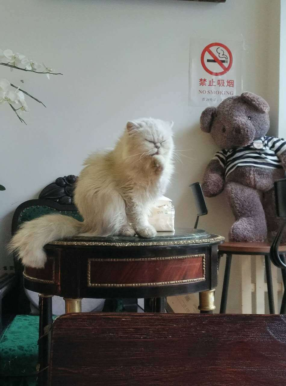 cat cafe, shanghai, coffee, Untour Shanghai